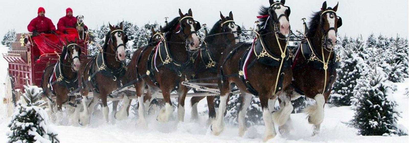 Winter Horses image slide