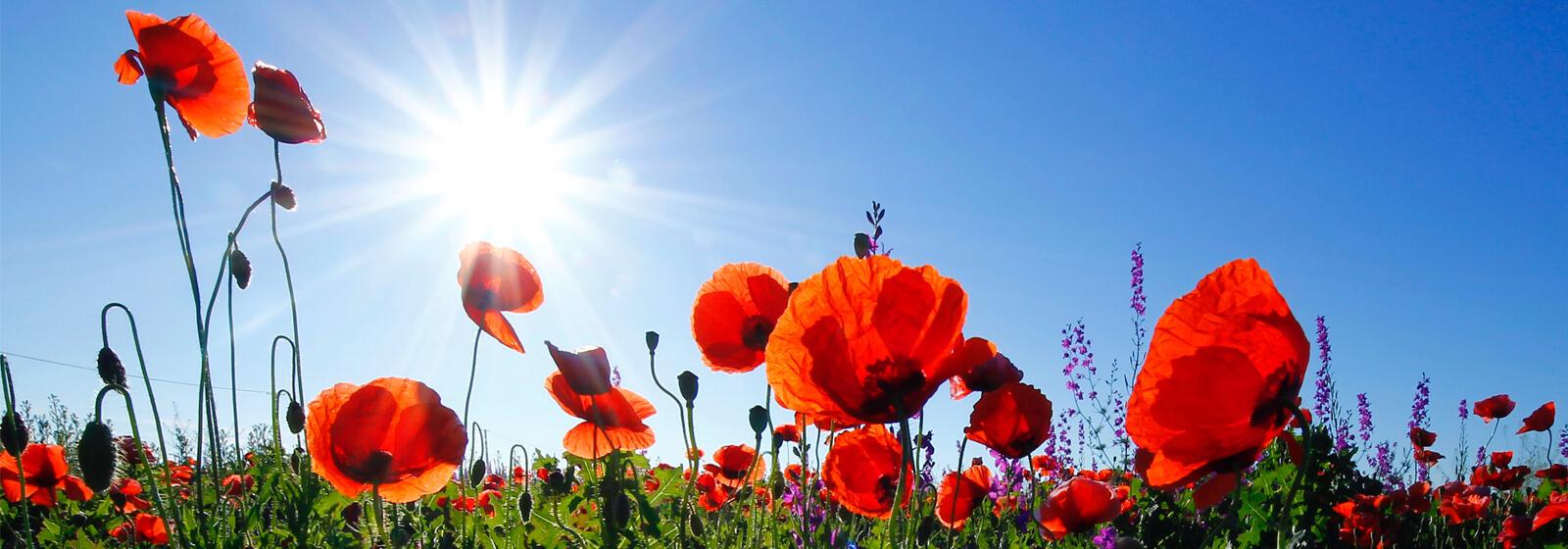 Flower image slide