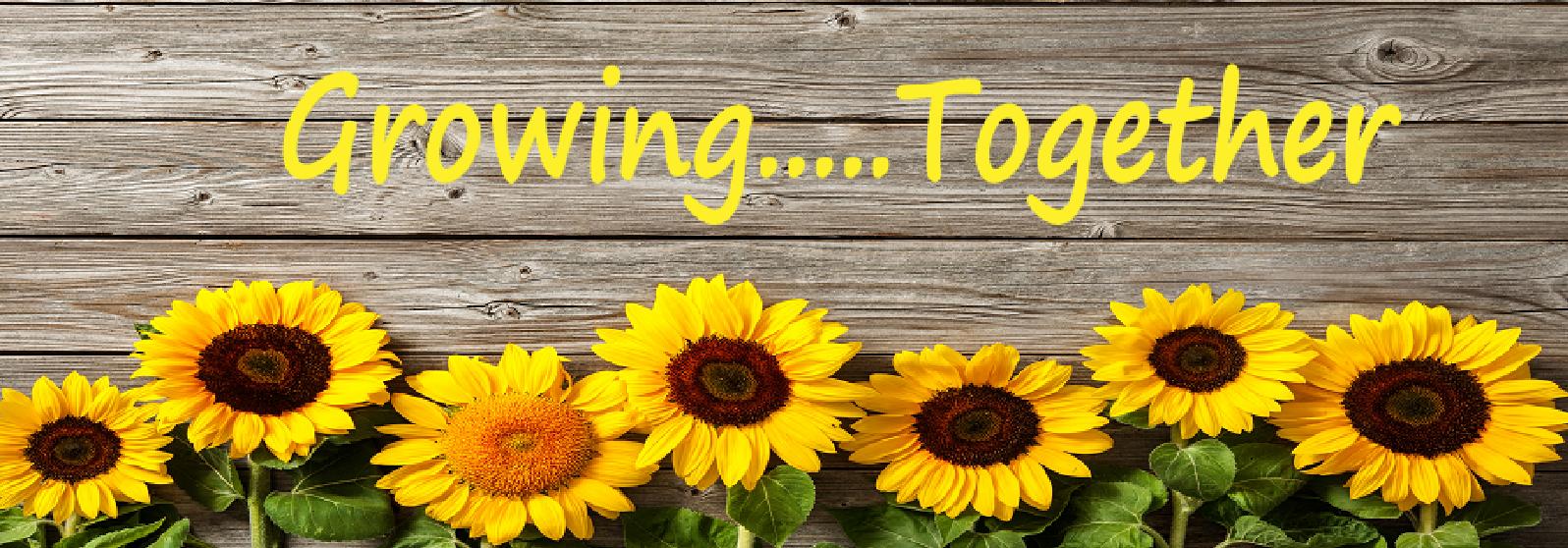 Sunflower image slide